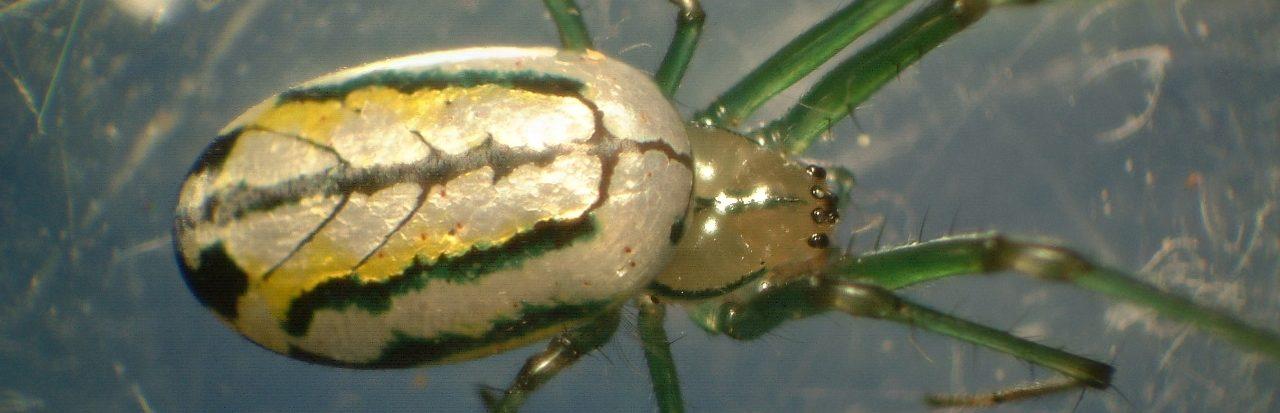 Spiders of Minnesota